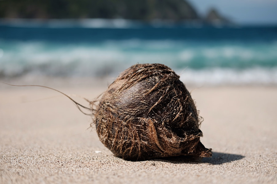 Lonely coconut in Lombok island!