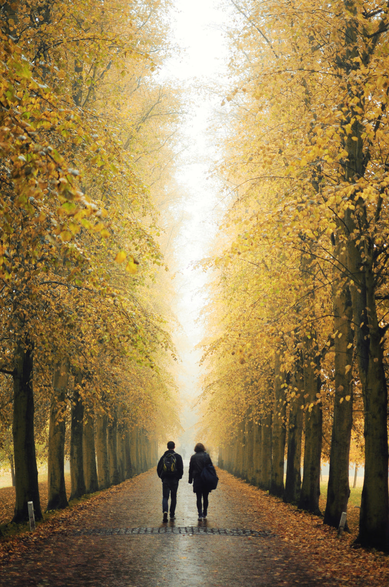 Photograph Golden Path by Ren Hui Yoong on 500px