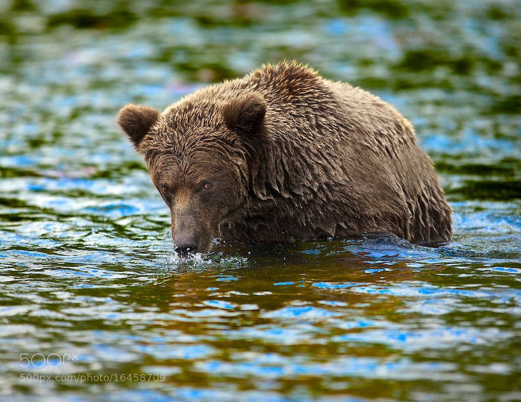 Photograph Blowing Bubbles by Buck Shreck on 500px