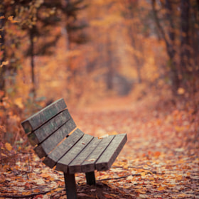 Have a Seat by Dustin Abbott on 500px.com
