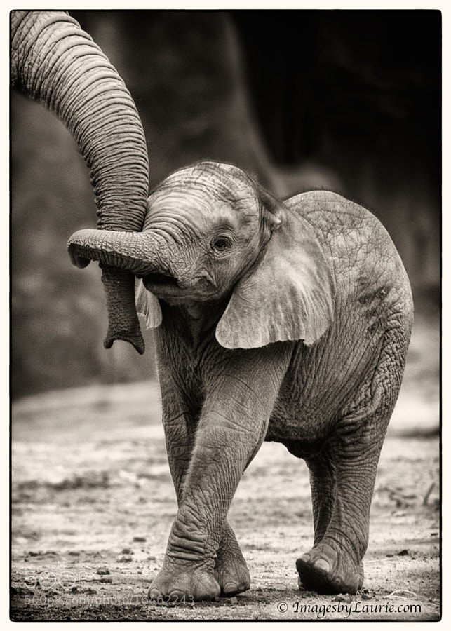 Photograph Baby Elephant Hug by Laurie Rubin on 500px