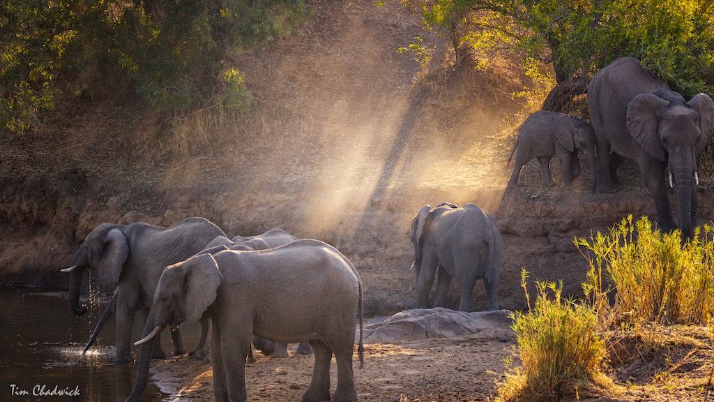 Photograph ElephantRay by Tim Chadwick on 500px