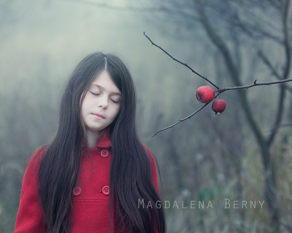 Photograph Red Apples by Magdalena Berny on 500px