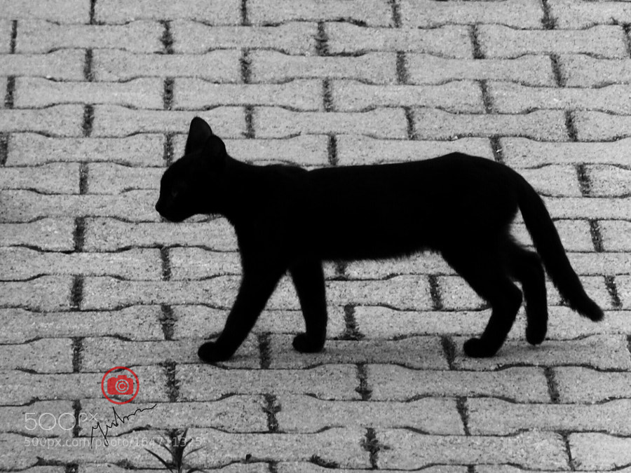 Are you superstitious if a black cat crosses your path ?
