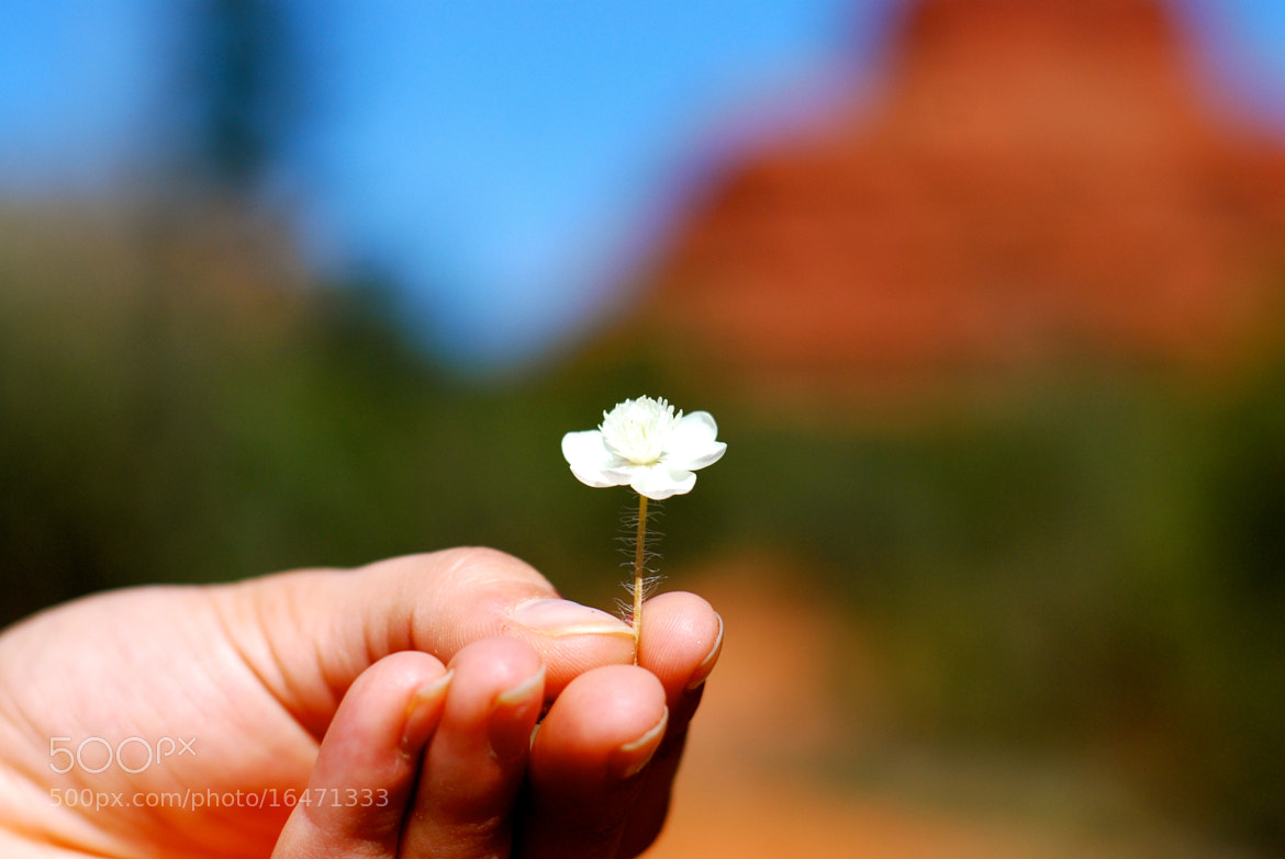 Photograph Flor del Desierto by R. Josue Marrero on 500px