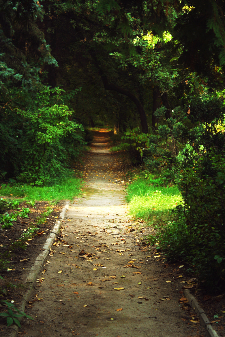 Photograph forest road by Ann Mysochka on 500px
