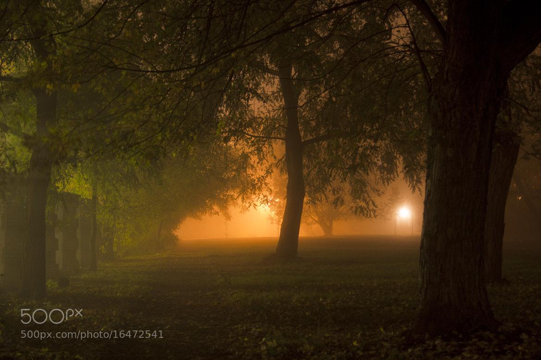 Photograph Welcome to the wonderland by Paula  Mozdrzewska on 500px