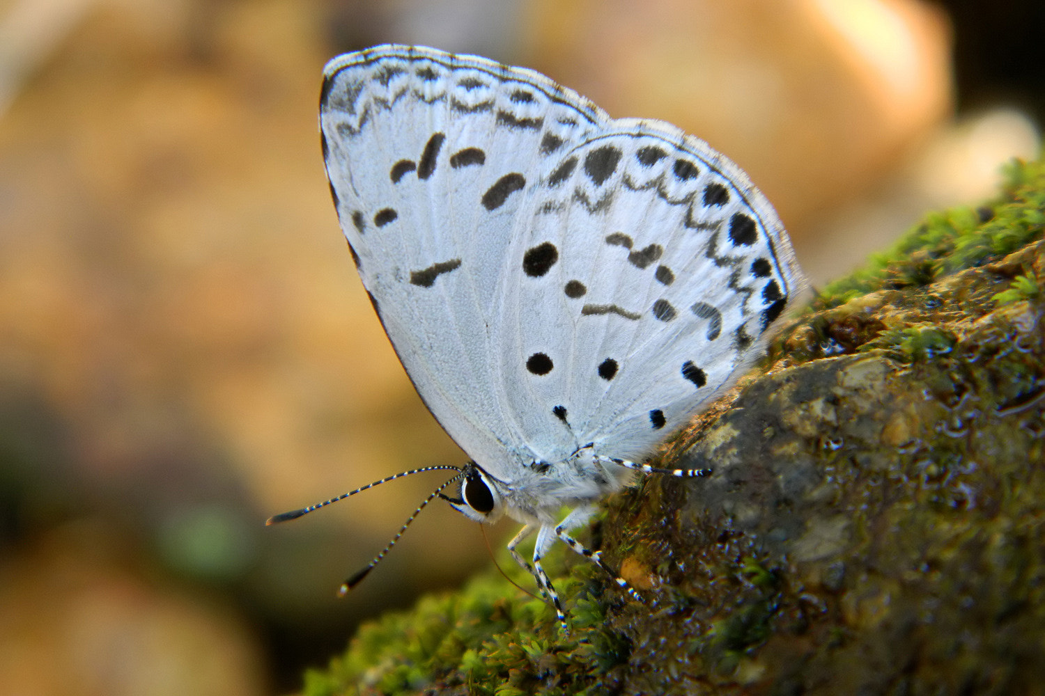 Photograph Common Hedge Blue by edmond lisy on 500px