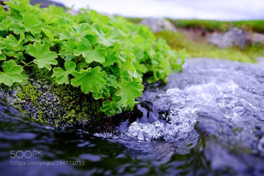 Plants by a stream