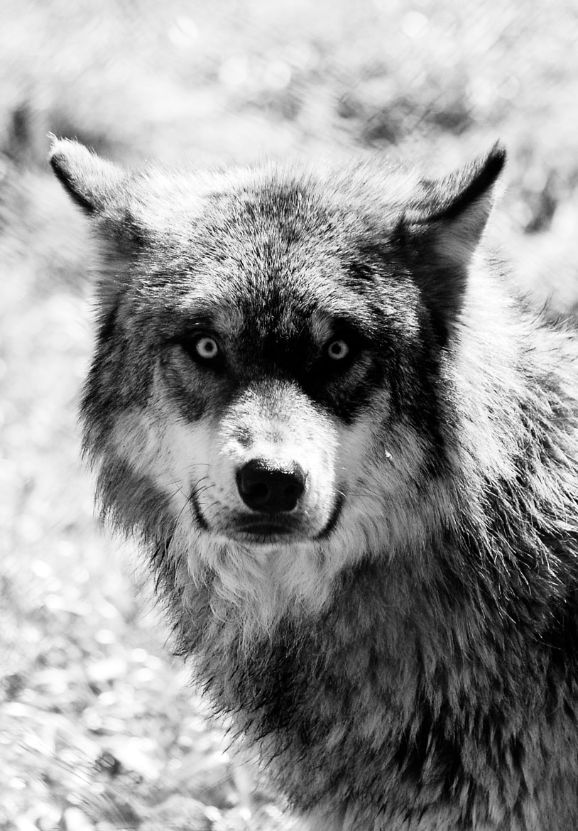 Photograph Into the Wild...Eyes by Lisette Fauvel on 500px
