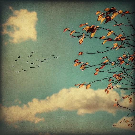 Photograph Autumn Poetry by Alex Arnaoudov on 500px