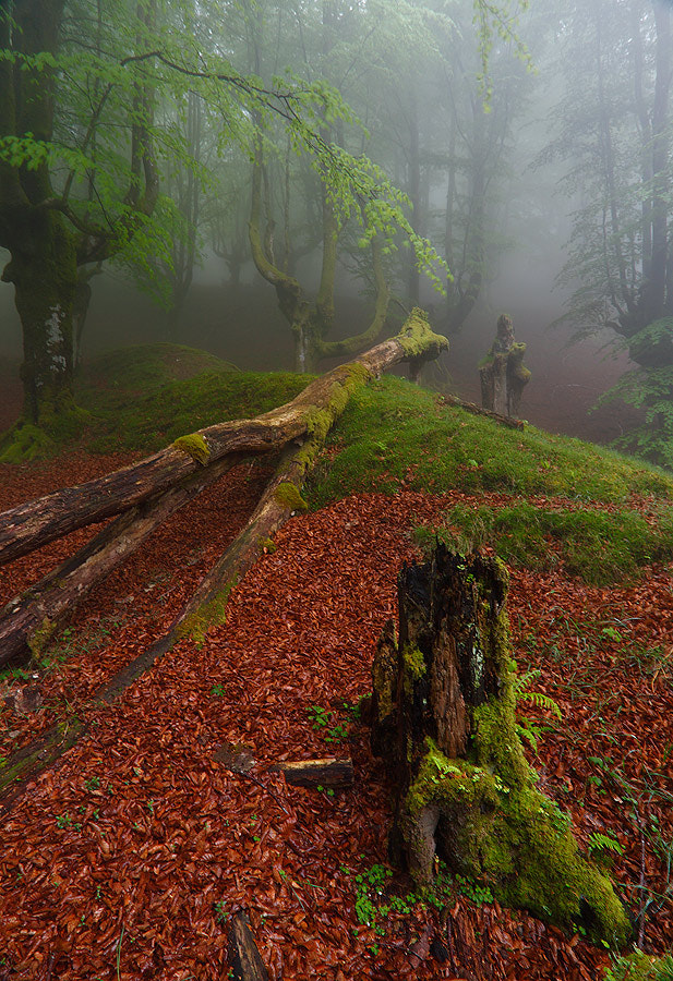 """Photograph """" Forest Scenes II """" by Juan Pavon on 500px"""