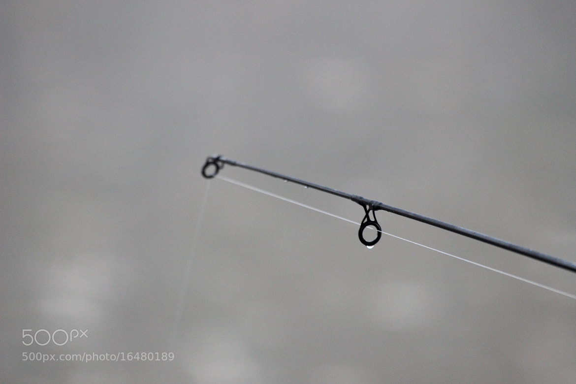 Photograph Dewy Fishing by Ádám Danyi on 500px