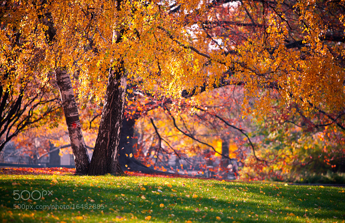 Photograph Autumn in Vienna by Sergey Shaposhnikov on 500px