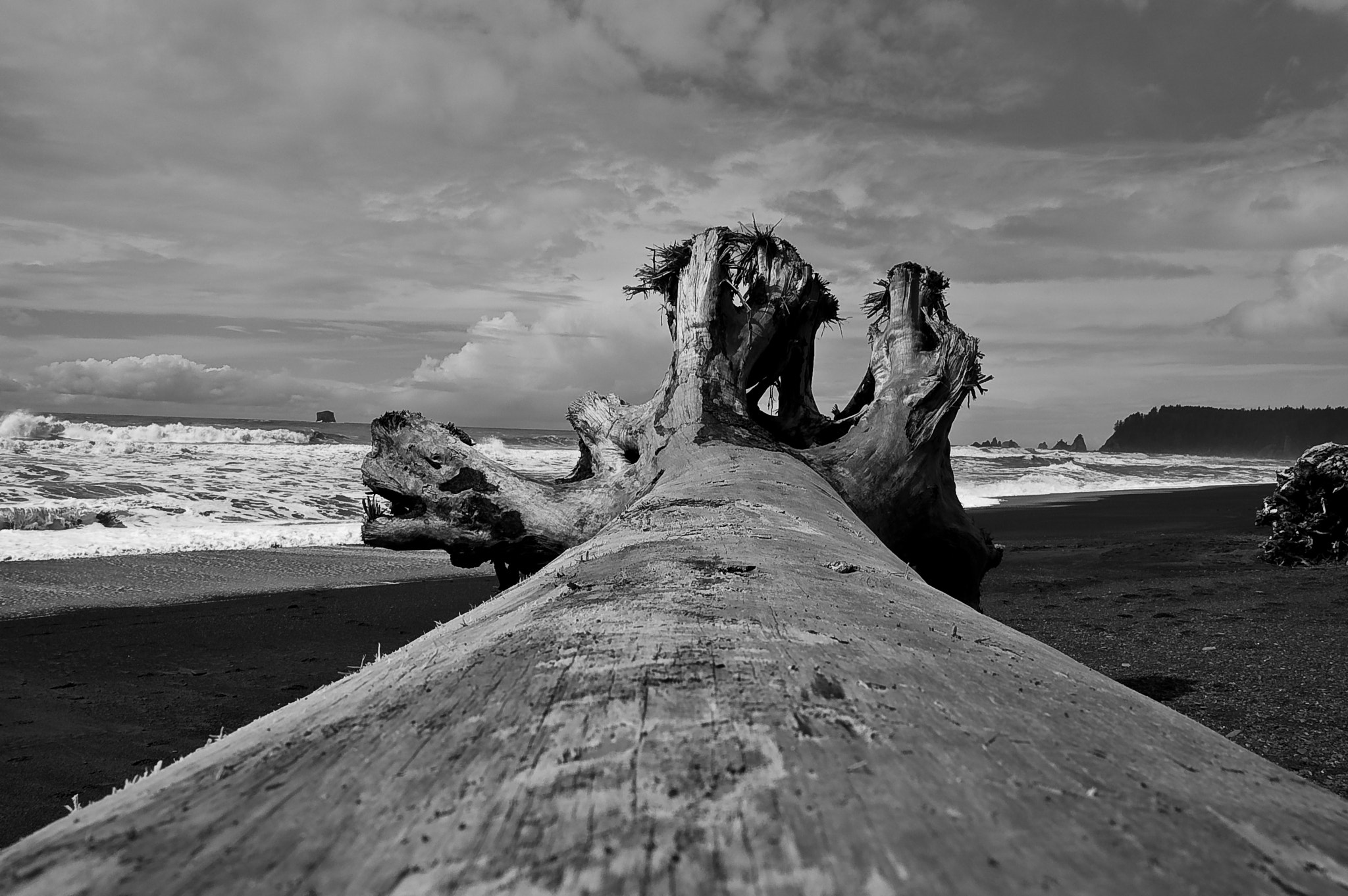 Photograph Driftwood by Michael Wolf on 500px