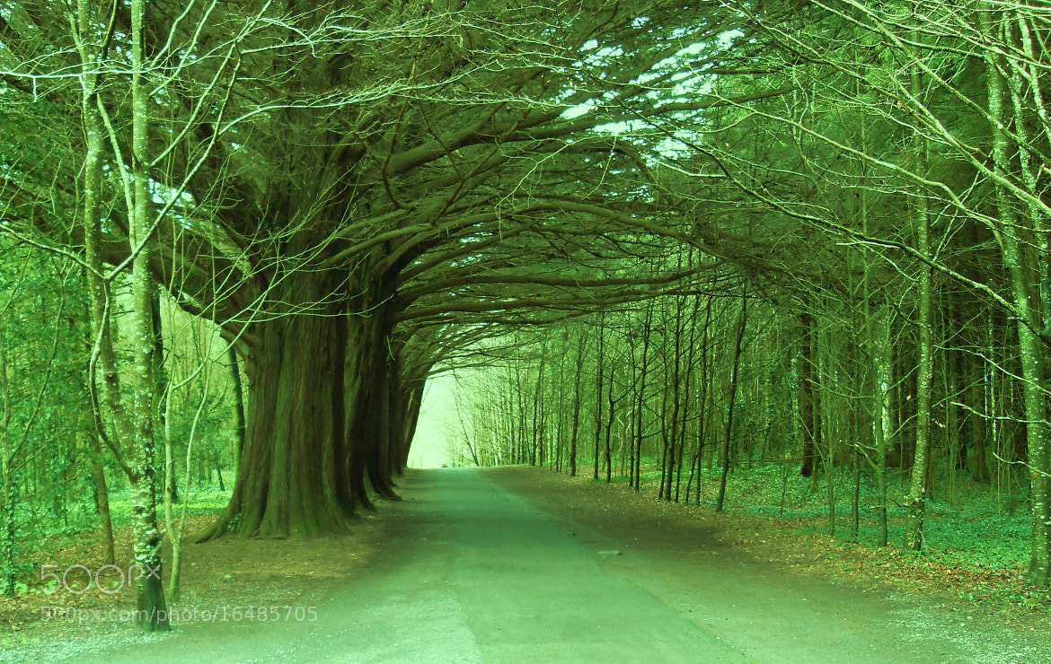 Photograph Coole park by Richie Moylan on 500px
