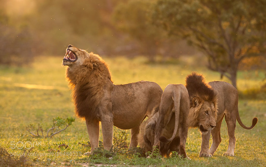 Photograph The Three Kings by Marlon du Toit on 500px