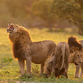 The Three Kings by Marlon du Toit (marlondutoit)) on 500px.com