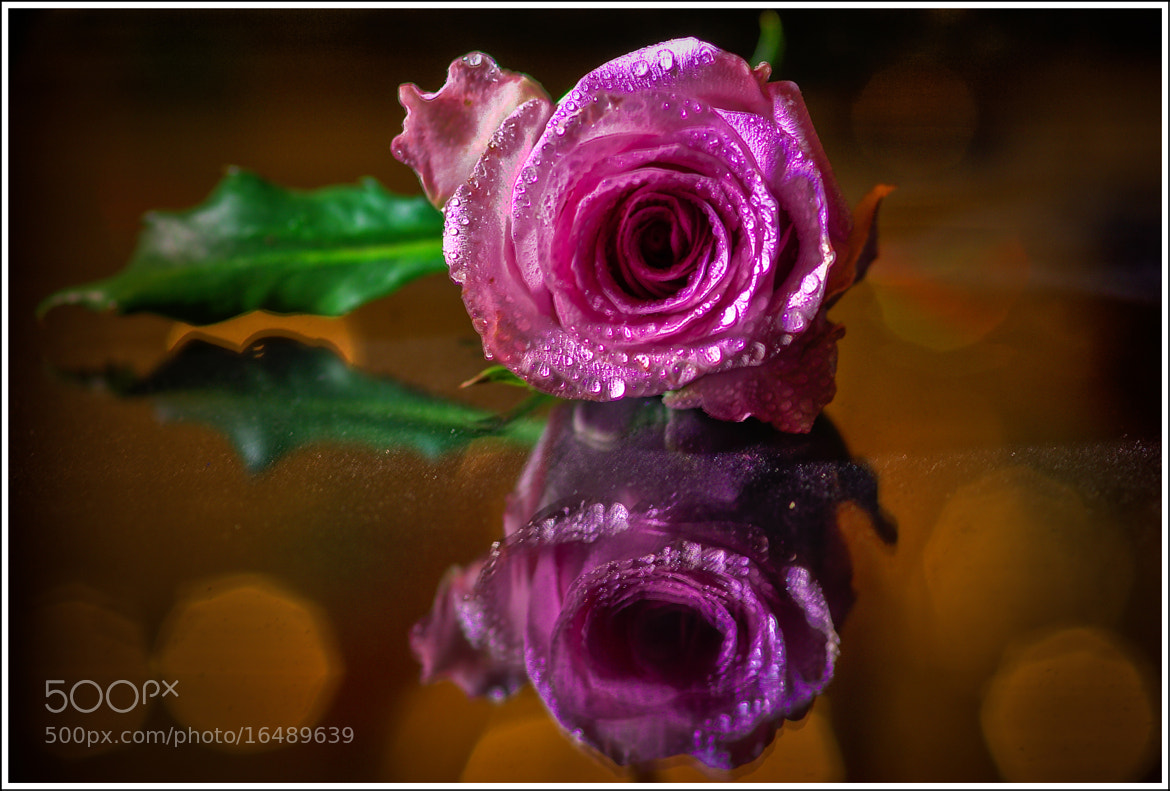 Photograph Rose (HDR) by Richard Swint on 500px