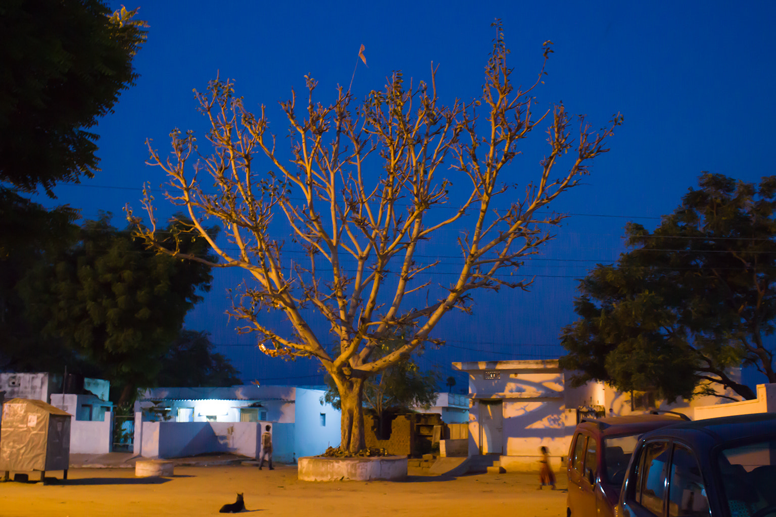 Photograph Live tree without Leafs by Gajender Singh Thakur on 500px