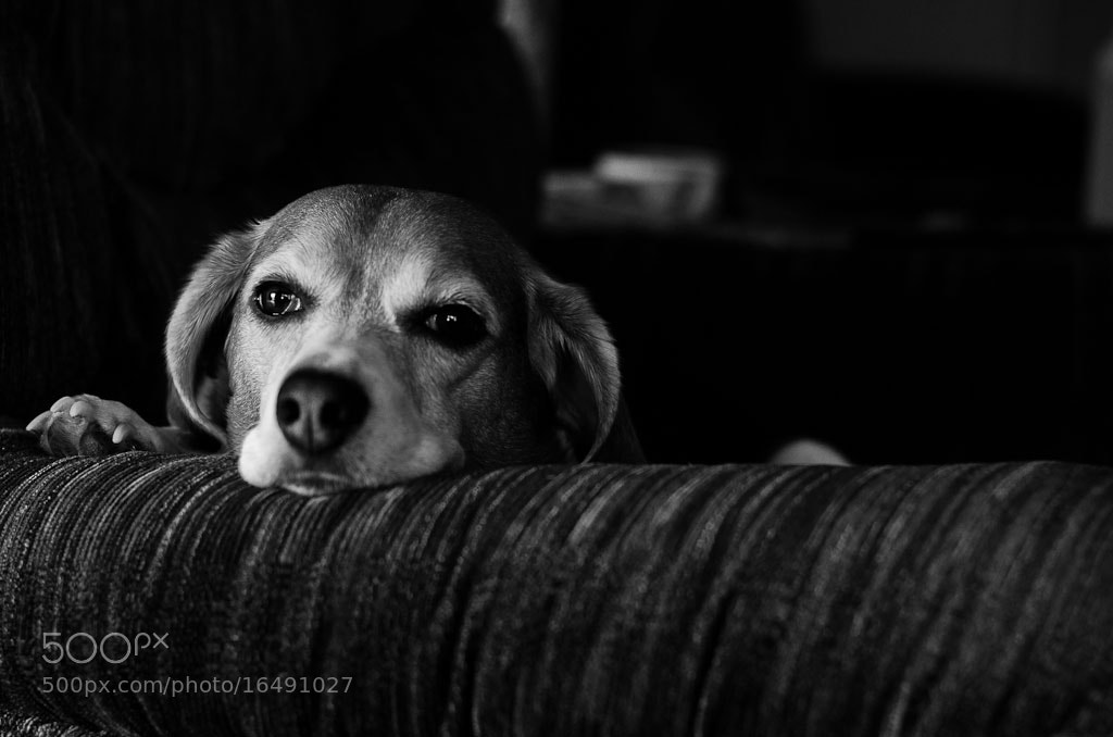 Photograph Zoey by Brian Posten on 500px