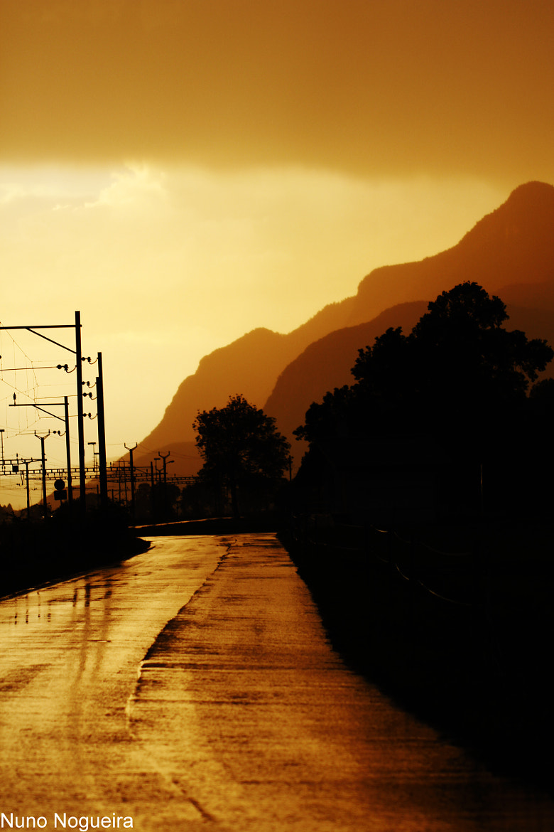 Photograph Golden road by Nuno Nunes on 500px