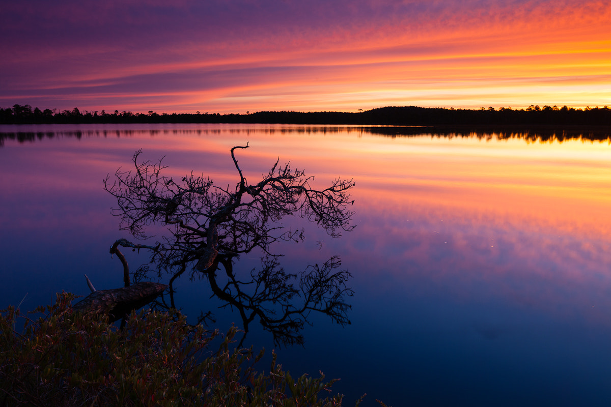 Photograph Color Explosion in the Morning by Jaak Sarv on 500px