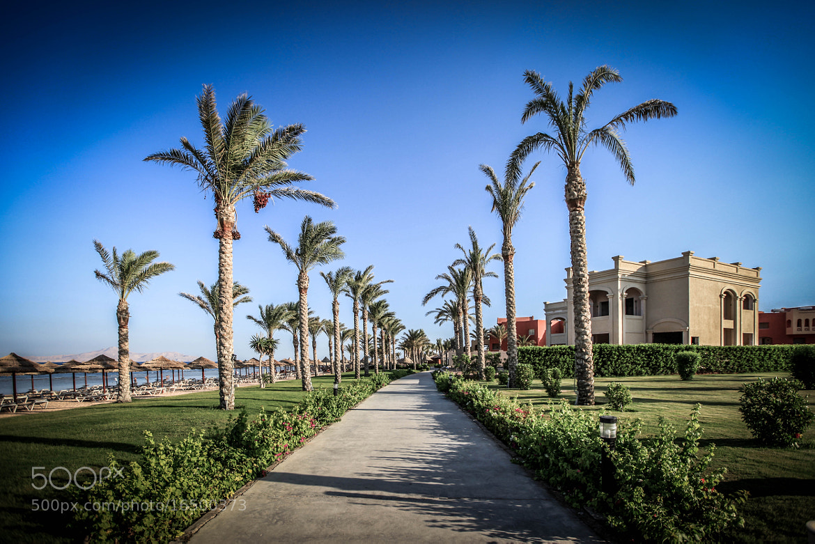 Photograph The Palm Walk by David Turney on 500px