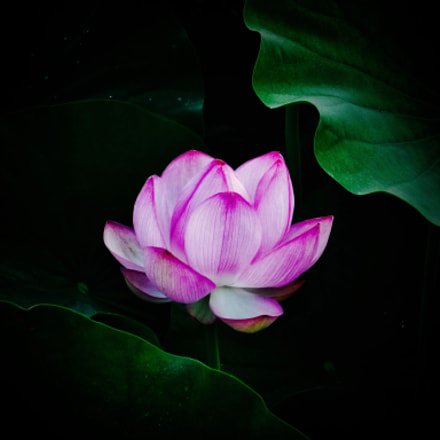 Lotus, Panasonic DMC-FX60