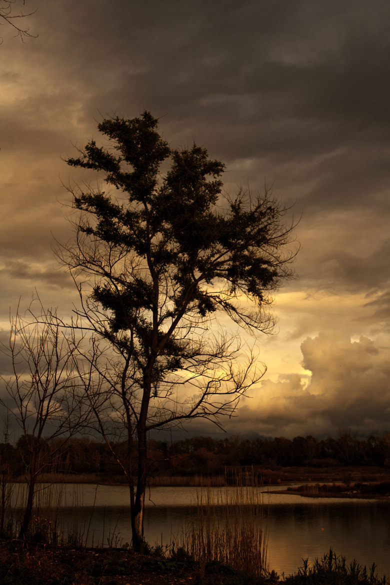 Photograph Stormy Tree by Stephen Collette on 500px