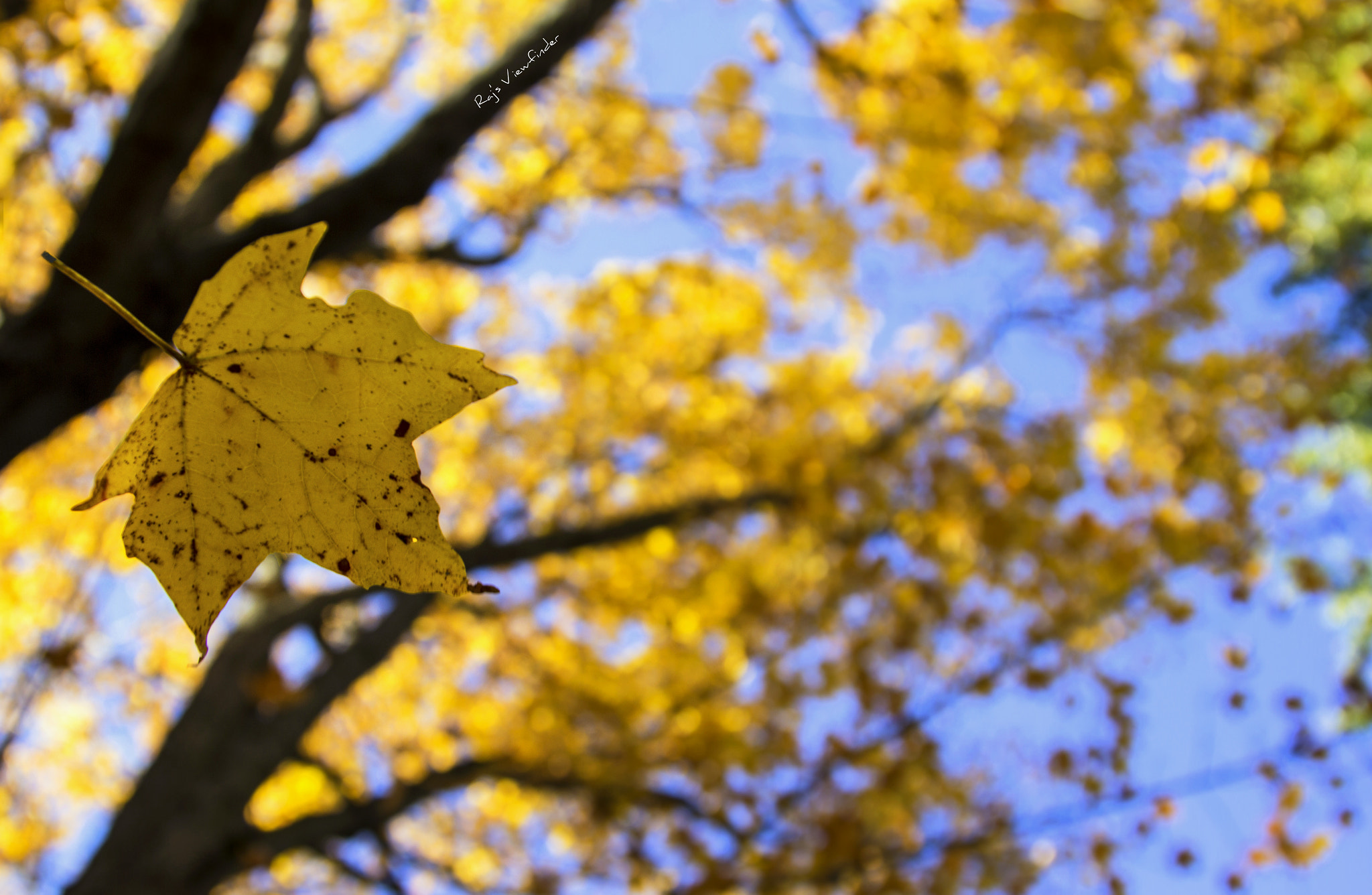 Photograph When Leaves Fall :) by Raj's Viewfinder on 500px