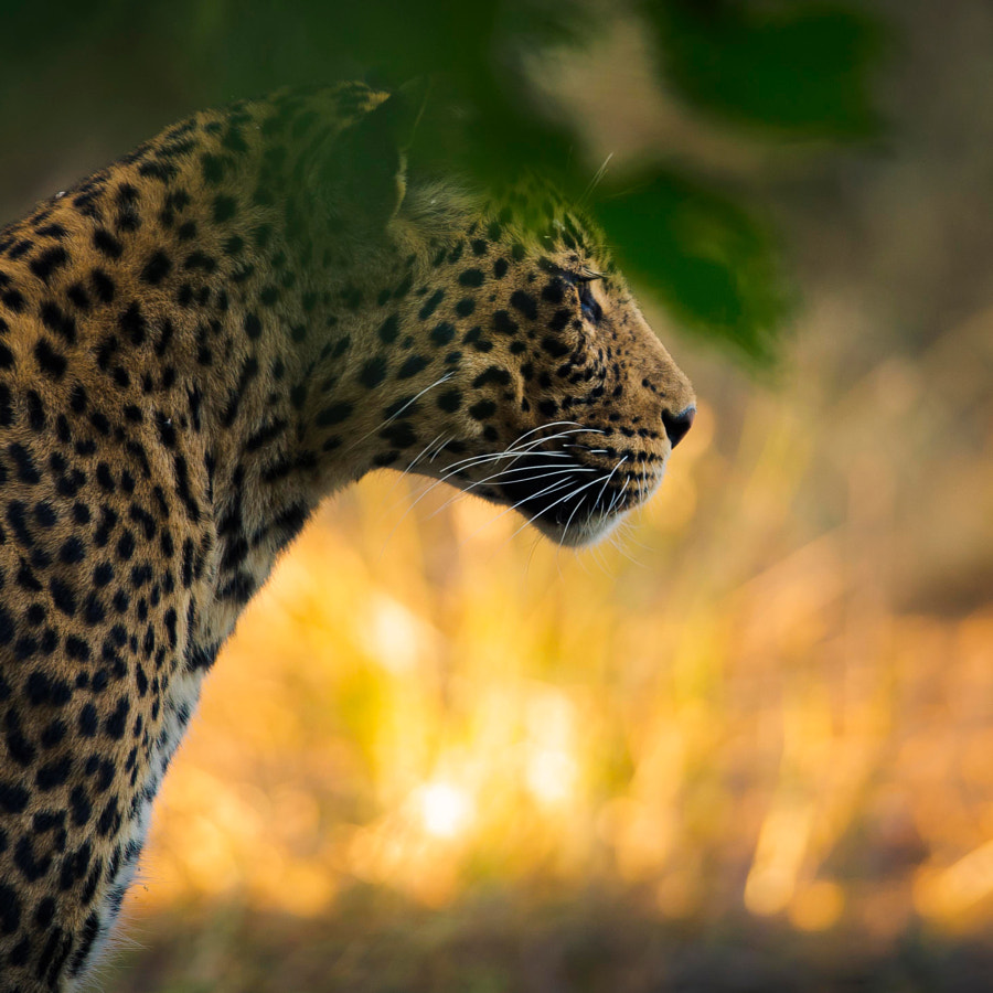 Warmth de Chris Fischer sur 500px.com