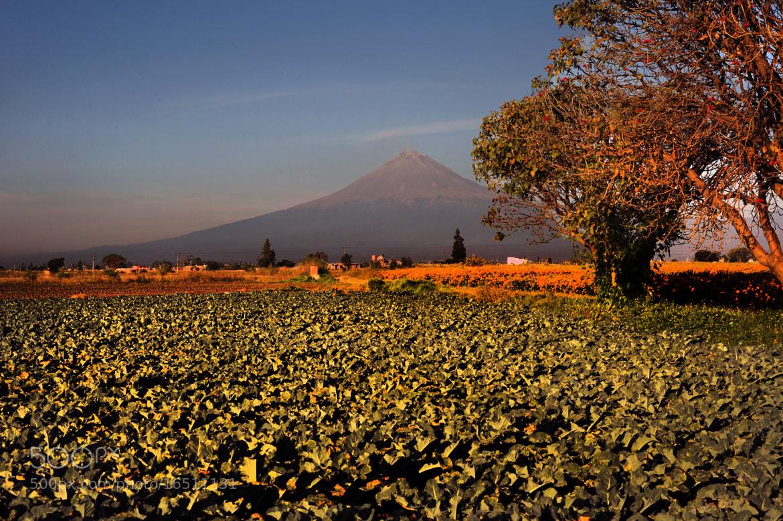 Photograph Broccoli field and Volcano by Cristobal Garciaferro Rubio on 500px