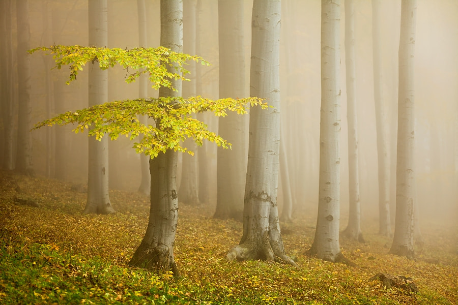 Photograph Fairytale forest by Daniel Řeřicha on 500px