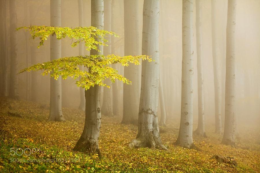 Photograph Fairytale forest by Daniel Řeřicha on 500px