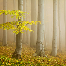 Fairytale forest by Daniel Řeřicha (Rericha)) on 500px.com