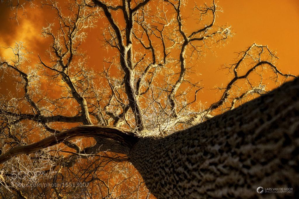 Photograph Brilliant Trees by Lars van de Goor on 500px