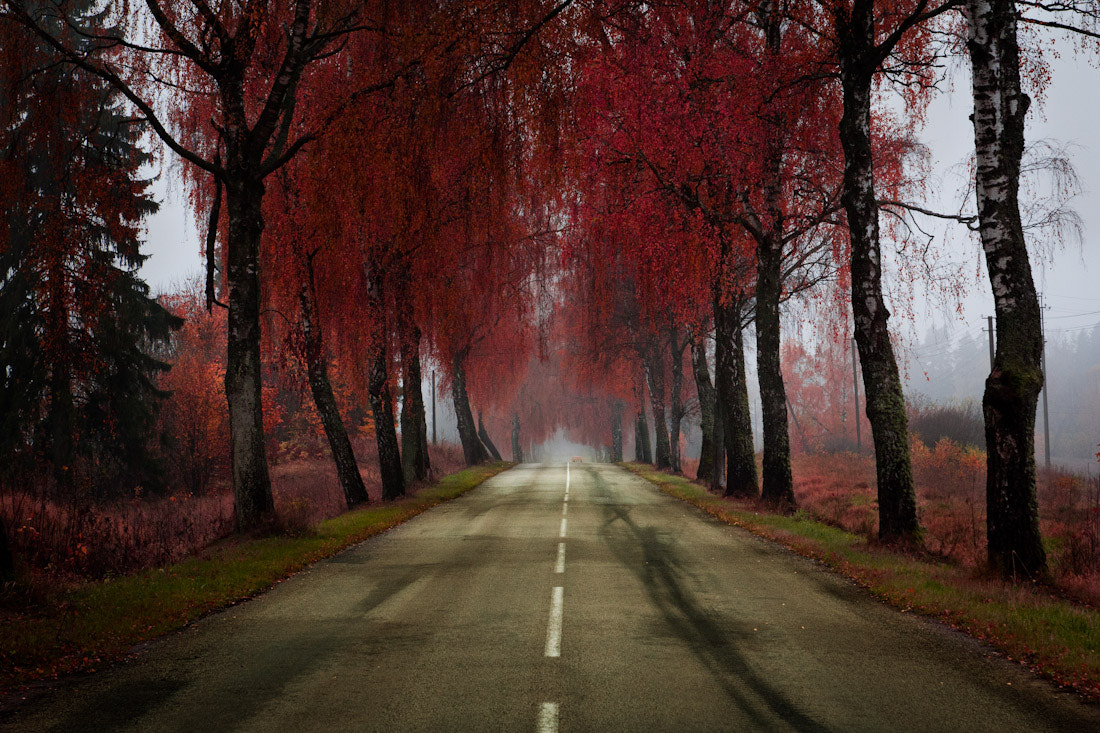 Photograph Road by Mindaugas Ma on 500px