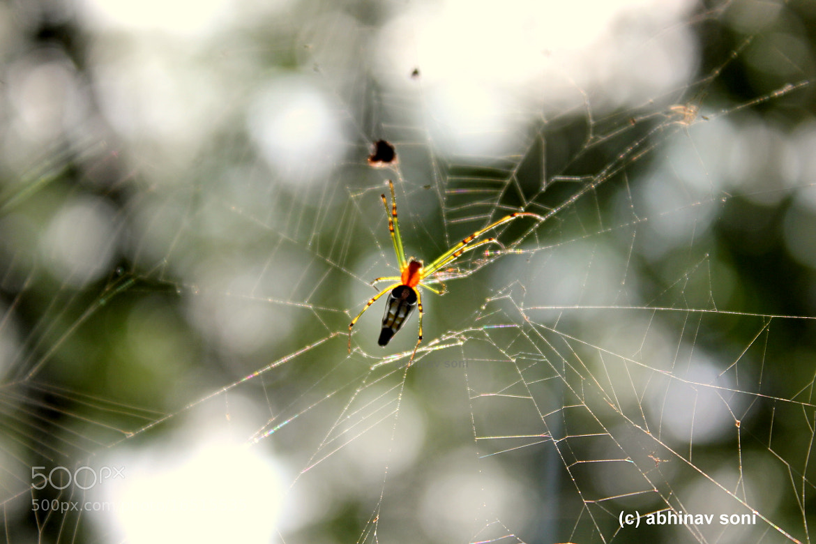 Photograph spider by Abhinav Soni on 500px