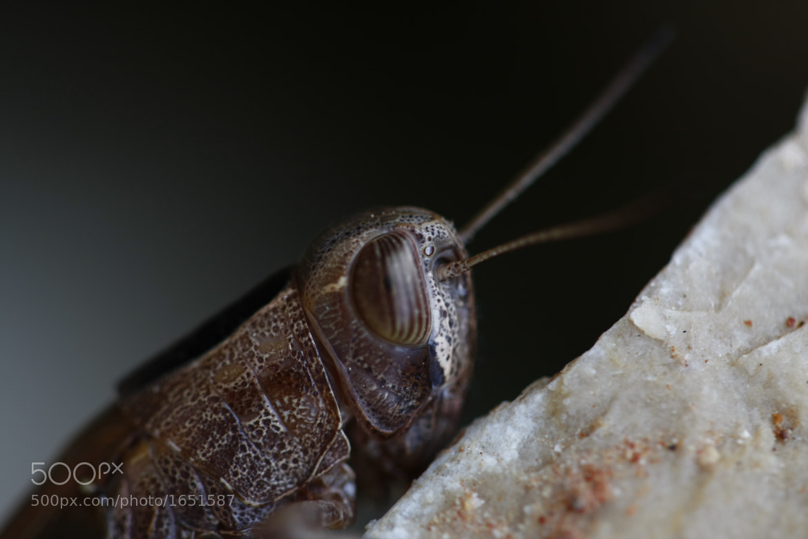 Photograph Saltamontes by Carlos JG on 500px