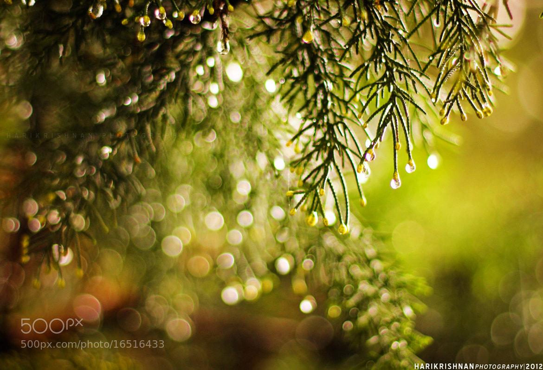 Photograph Dew Drops by Harikrishnan P on 500px