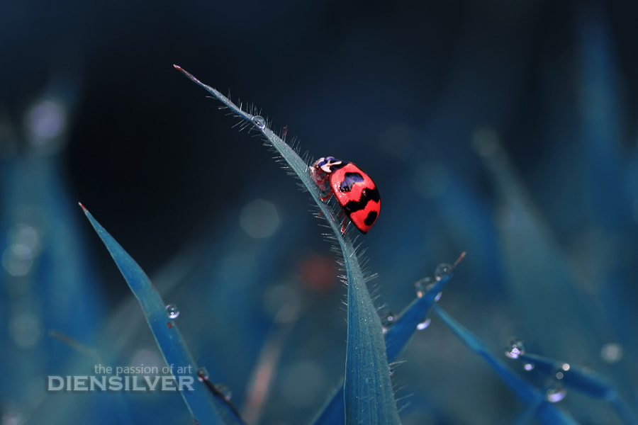 Photograph The valley of lady bug  by Diens Silver on 500px