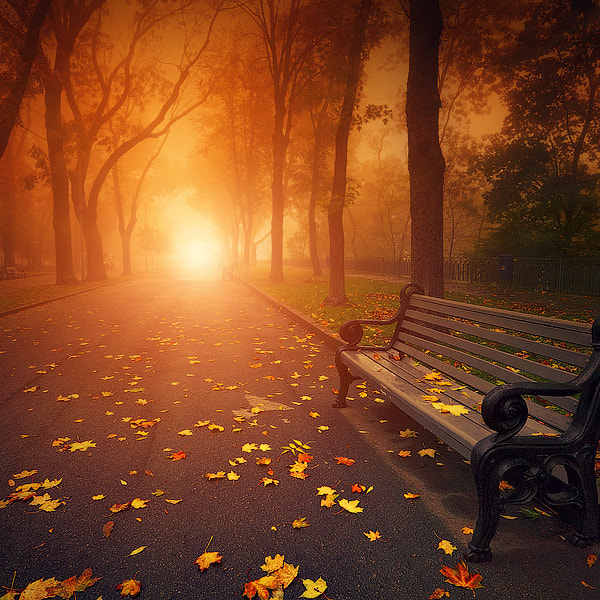 bench in foggy autumn park
