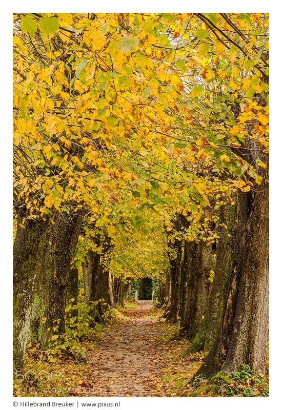 Photograph Autumn modes by Hillebrand Breuker on 500px