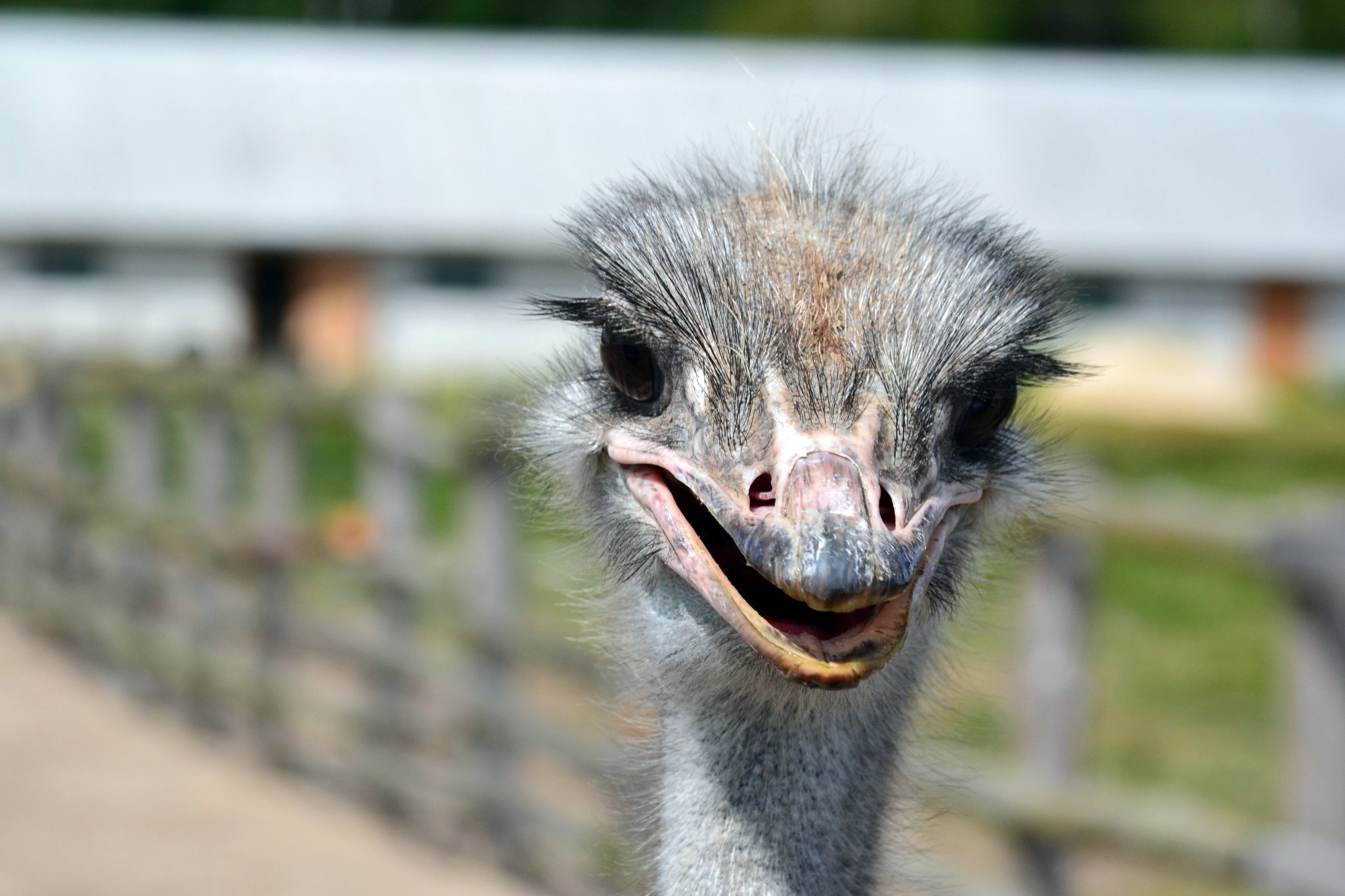Photograph Ostrich by Alexander Mazuk on 500px
