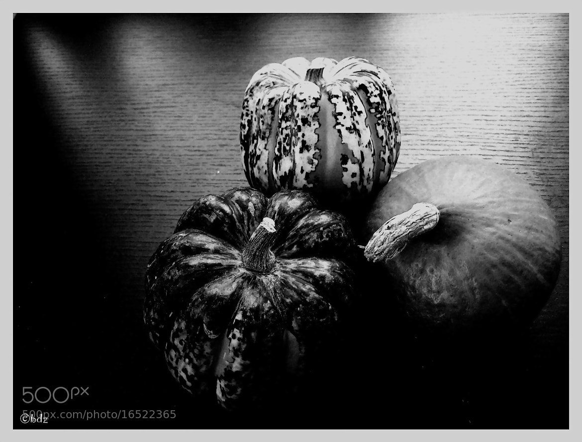 Photograph pumpkin time 2  by Betty Ditscheid on 500px