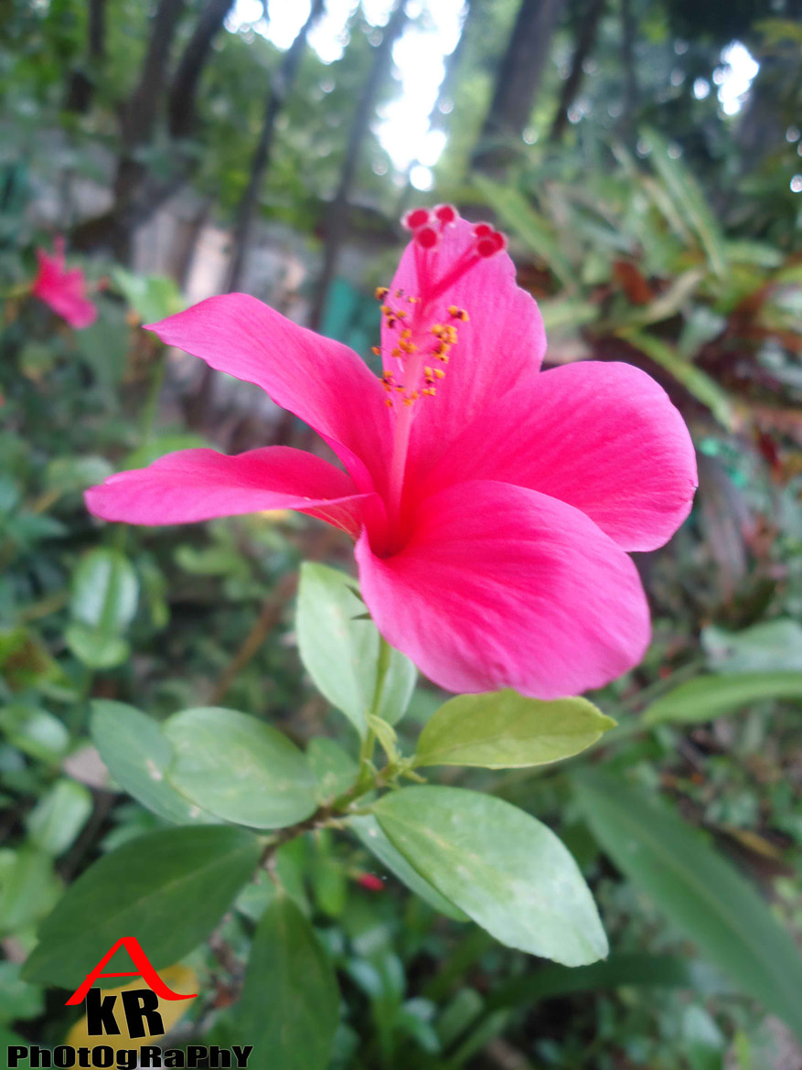 Photograph A pInK FlOwEr by R KrIsHna PhOtOgRaPhY on 500px