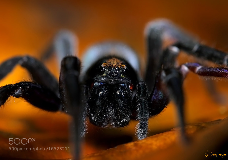 Photograph Black Devil .....! by bug eye :) on 500px