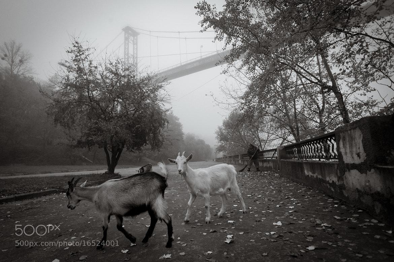 Photograph Urban goats by Vyacheslav Ratynski on 500px