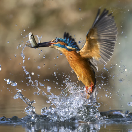 Catch!!!